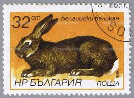 rabbit stamp